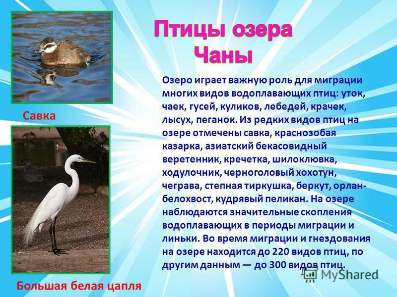 Озеро играет важную роль для миграции многих видов водоплавающих птиц: уток, чаек, гусей, куликов, лебедей, крачек, лысух, пеганок. Из редких видов птиц на озере отмечены савка, краснозобая казарка, азиатский бекасовидный веретенник, креветка, шилокл