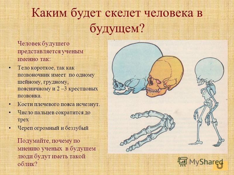 Каким будет скелет человека в будущем? Человек будущего представляется ученым именно так: Тело короткое, так как позвоночник имеет по одному шейному, грудному, поясничному и 2 –3 крестцовых позвонка. Кости плечевого пояса исчезнут. Число пальцев сокр