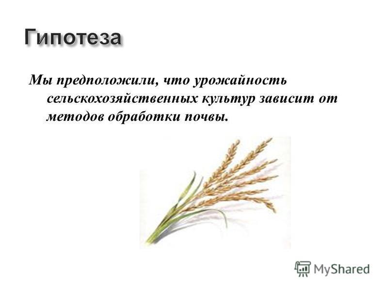 Мы предположили, что урожайность сельскохозяйственных культур зависит от методов обработки почвы.