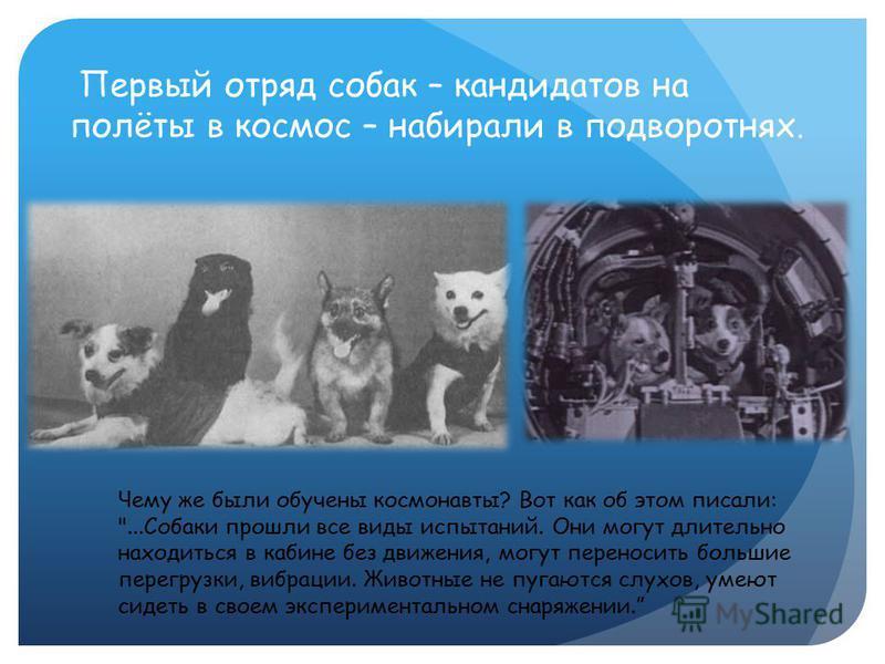 Первый отряд собак – кандидатов на полёты в космос – набирали в подворотнях. Чему же были обучены космонавты? Вот как об этом писали: