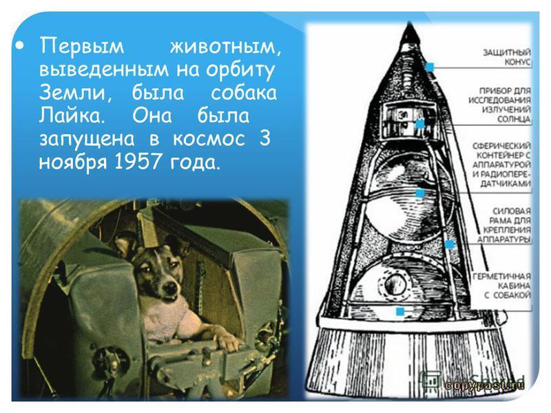 Первым животным, выведенным на орбиту Земли, была собака Лайка. Она была запущена в космос 3 ноября 1957 года.