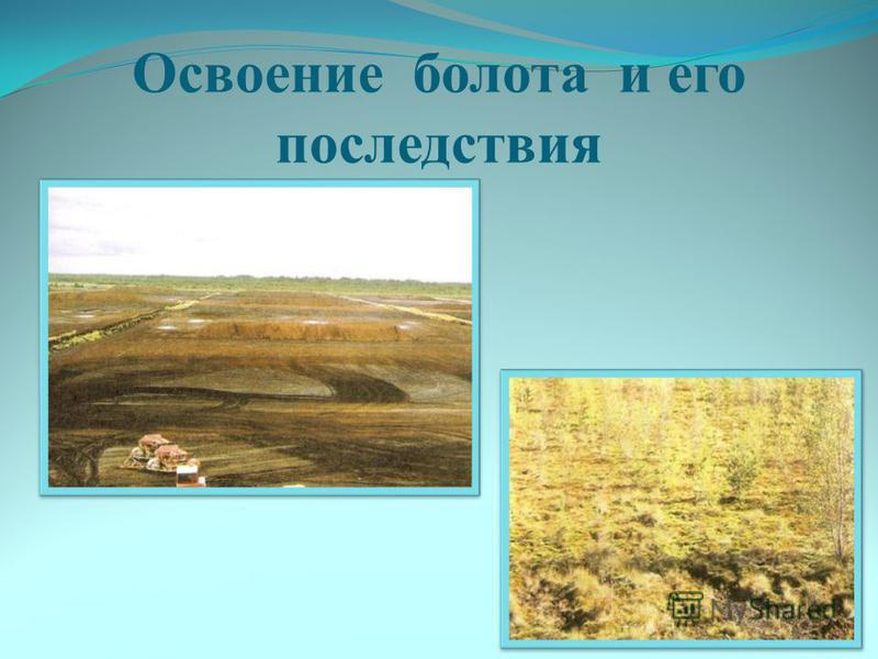 Освоение болота и его последствия