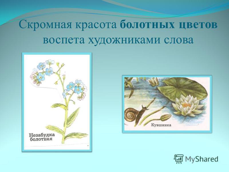 Скромная красота болотных цветов воспета художниками слова