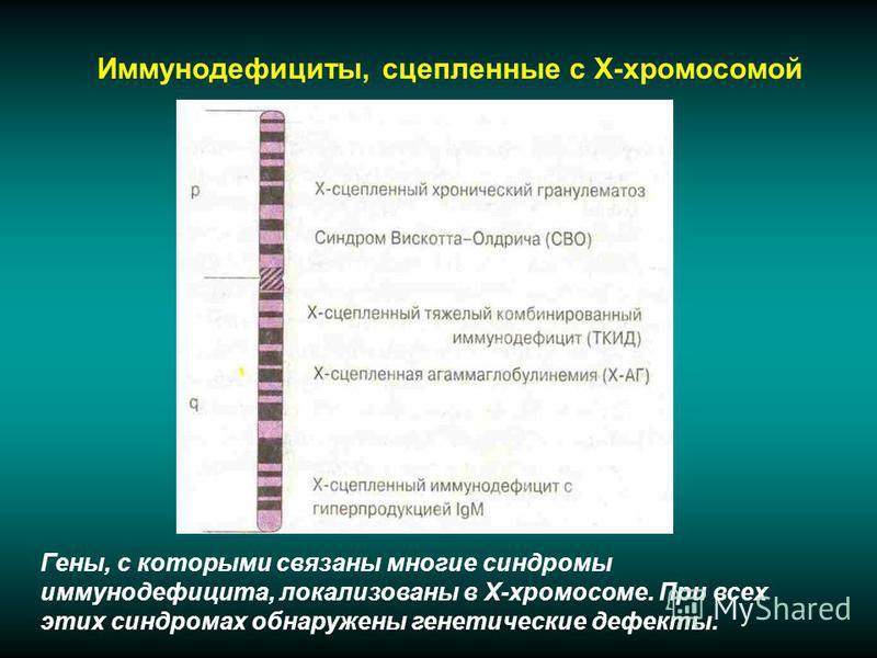 Иммунодефициты, сцепленные с Х-хромосомой Гены, с которыми связаны многие синдромы иммунодефицита, локализованы в Х-хромосоме. При всех этих синдромах обнаружены генетические дефекты.