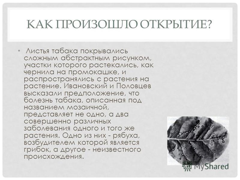 КАК ПРОИЗОШЛО ОТКРЫТИЕ? Листья табака покрывались сложным абстрактным рисунком, участки которого растекались, как чернила на промокашке, и распространялись с растения на растение. Ивановский и Половцев высказали предположение, что болезнь табака, опи