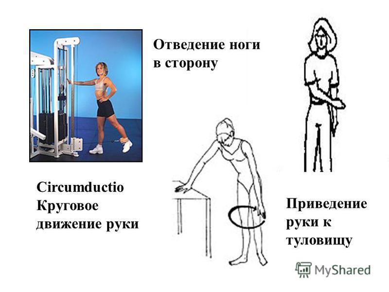Отведение ноги в сторону Приведение руки к туловищу Circumductio Круговое движение руки