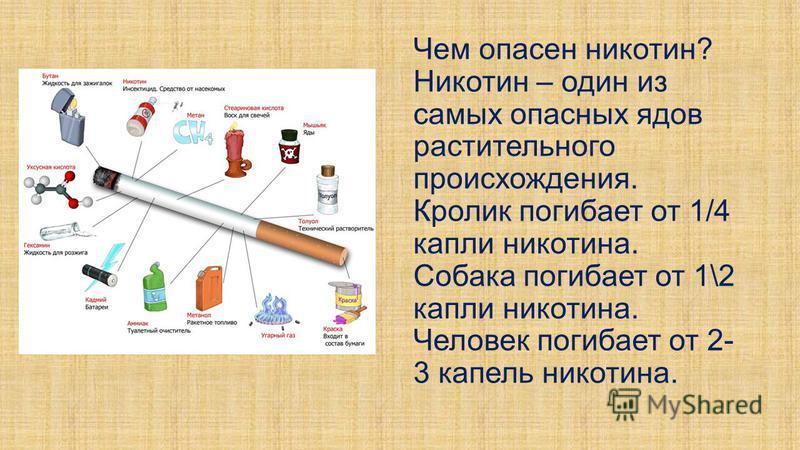 Чем опасен никотин? Никотин – один из самых опасных ядов растительного происхождения. Кролик погибает от 1/4 капли никотина. Собака погибает от 1\2 капли никотина. Человек погибает от 2- 3 капель никотина.