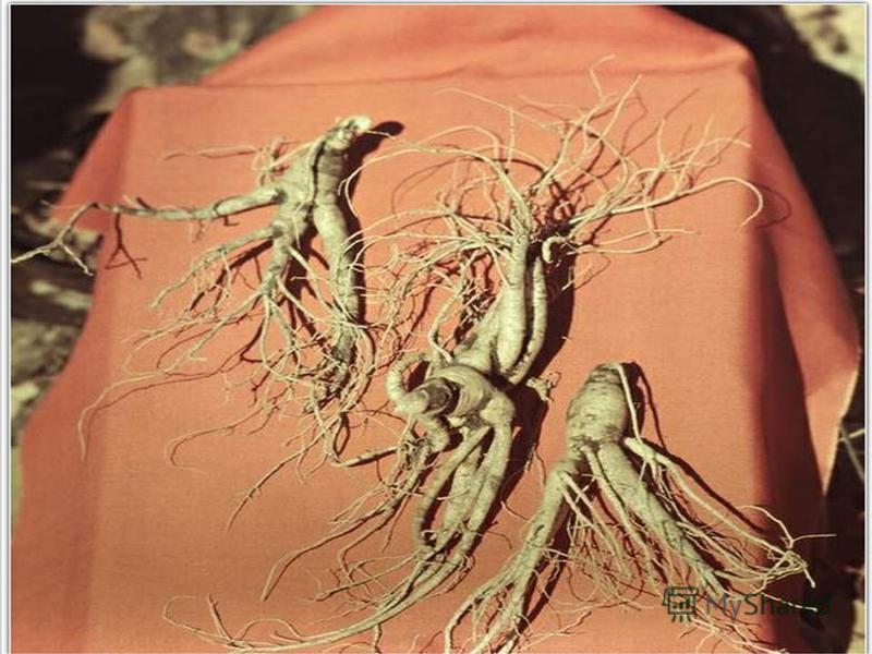 Л ЕКАРСТВЕННЫЕ РАСТЕНИЯ Есть корень кривой и рогатый, Целебною силой богатый. И может, два века Он ждет человека В чащобе лесной Под кедровой сосной. Женьшень