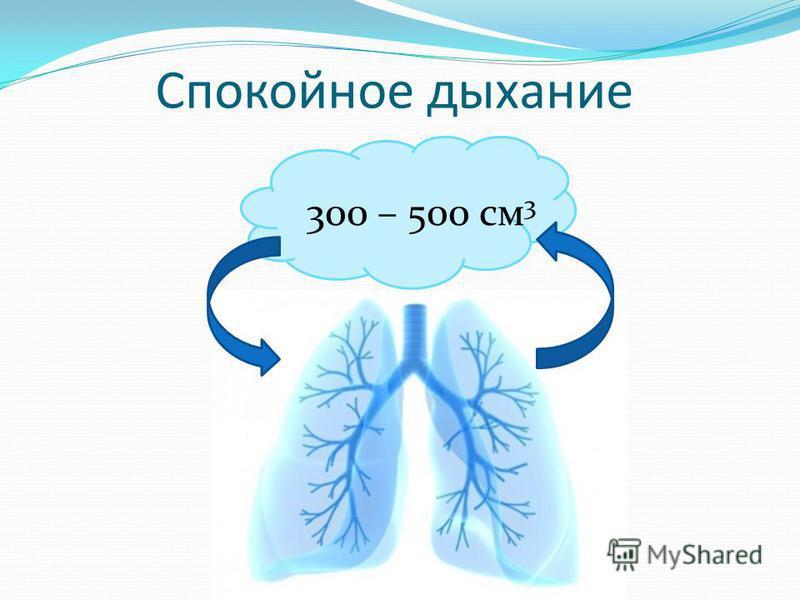 Спокойное дыхание 300 – 500 см 3