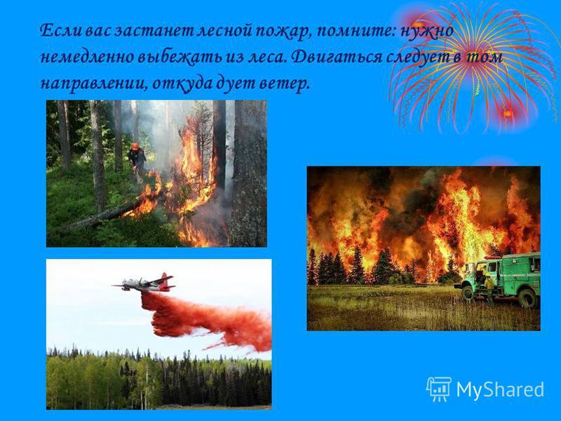 Если вас застанет лесной пожар, помните: нужно немедленно выбежать из леса. Двигаться следует в том направлении, откуда дует ветер.