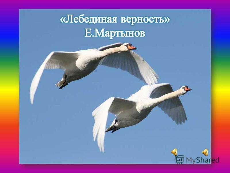 «ЛЕБЕДИНАЯ ВЕРНОСТЬ». Е.МАРТЫНОВ