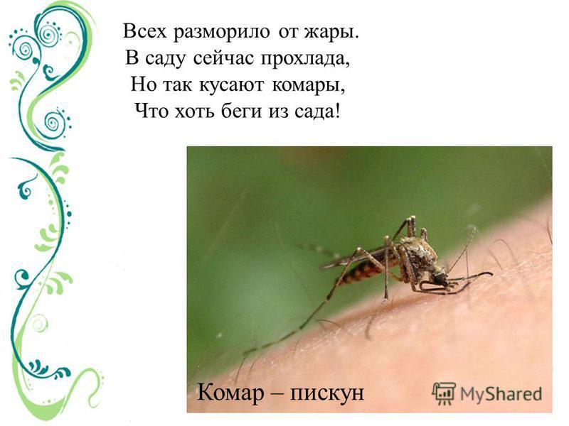 Всех разморило от жары. В саду сейчас прохлада, Но так кусают комары, Что хоть беги из сада! Комар – пискун