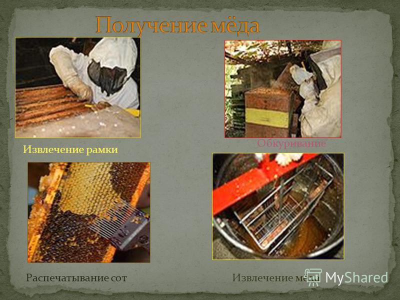 Извлечение рамки Обкуривание Распечатывание сот Извлечение мёда