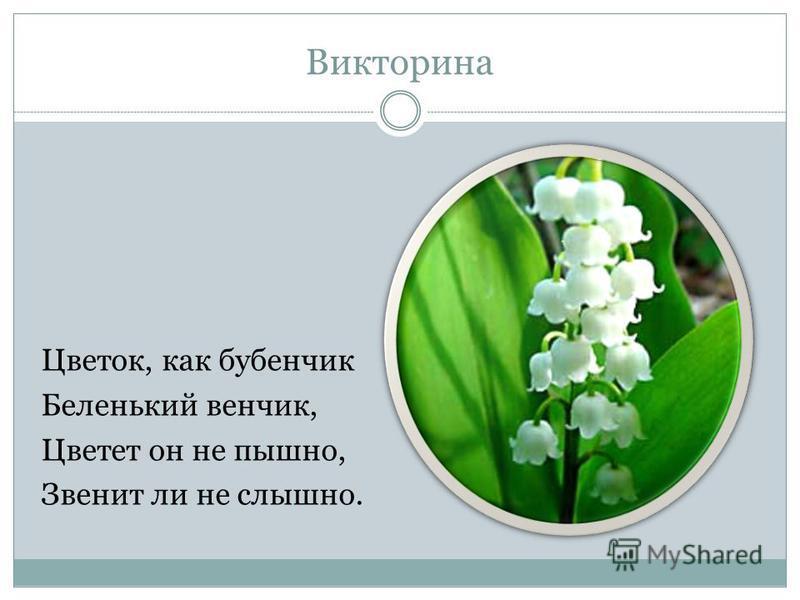 Викторина Цветок, как бубенчик Беленький венчик, Цветет он не пышно, Звенит ли не слышно.