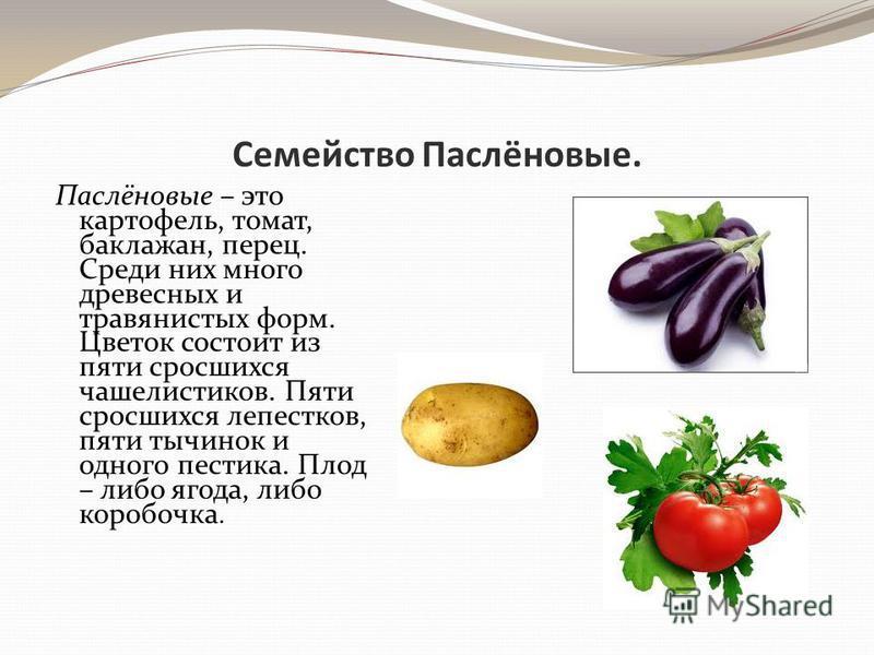 Семейство Паслёновые. Паслёновые – это картофель, томат, баклажан, перец. Среди них много древесных и травянистых форм. Цветок состоит из пяти сросшихся чашелистиков. Пяти сросшихся лепестков, пяти тычинок и одного пестика. Плод – либо ягода, либо ко