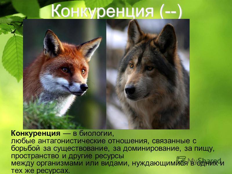 Конкуренция (--) Конкуренция в биологии, любые антагонистические отношения, связанные с борьбой за существование, за доминирование, за пищу, пространство и другие ресурсы между организмами или видами, нуждающимися в одних и тех же ресурсах.