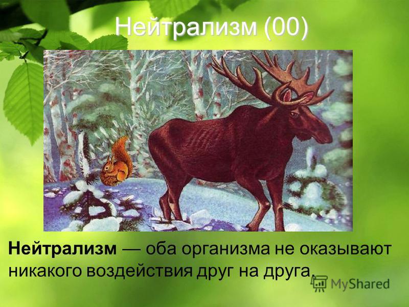 Нейтрализм (00) Нейтрализм оба организма не оказывают никакого воздействия друг на друга.