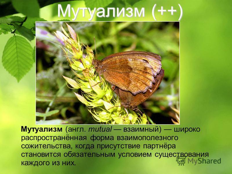 Мутуализм (++) Мутуализм (англ. mutual взаимный) широко распространённая форма взаимополезного сожительства, когда присутствие партнёра становится обязательным условием существования каждого из них.