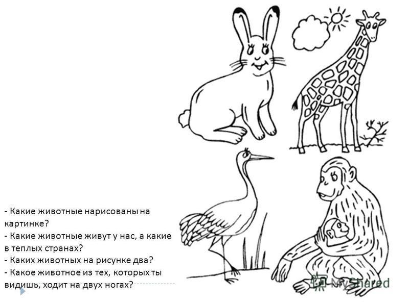 - Какие животные нарисованы на картинке ? - Какие животные живут у нас, а какие в теплых странах ? - Каких животных на рисунке два ? - Какое животное из тех, которых ты видишь, ходит на двух ногах ?