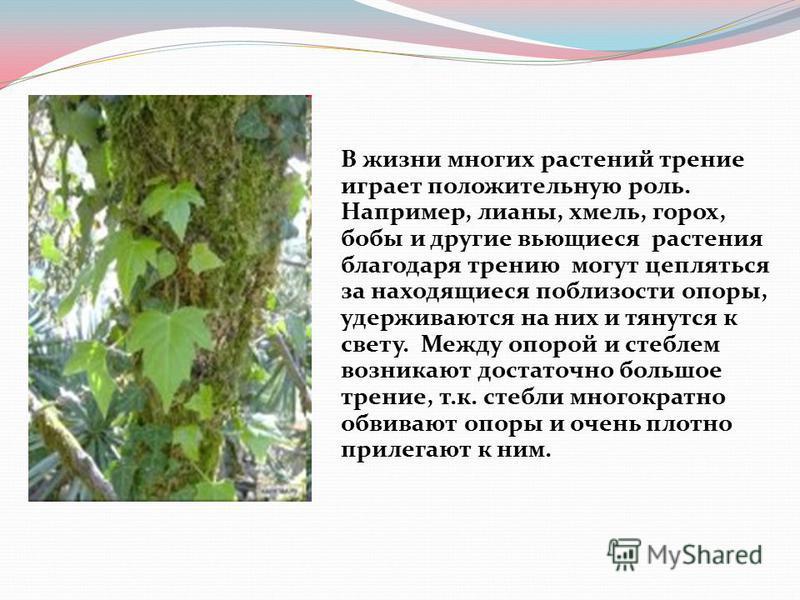 В жизни многих растений трении играет положительную роль. Например, лианы, хмель, горох, бобы и другие вьющиеся растения благодаря трению могут цепляться за находящиеся поблизости опоры, удерживаются на них и тянутся к свету. Между опорой и стеблем в