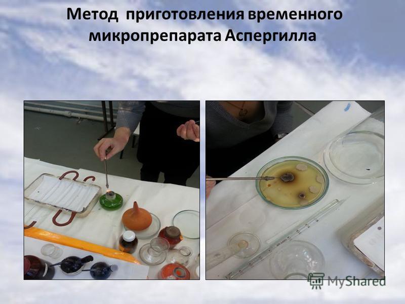 Метод приготовления временного микропрепарата Аспергилла
