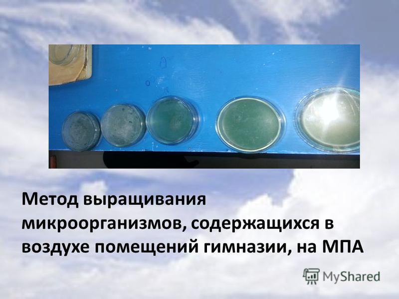 Метод выращивания микроорганизмов, содержащихся в воздухе помещений гимназии, на МПА