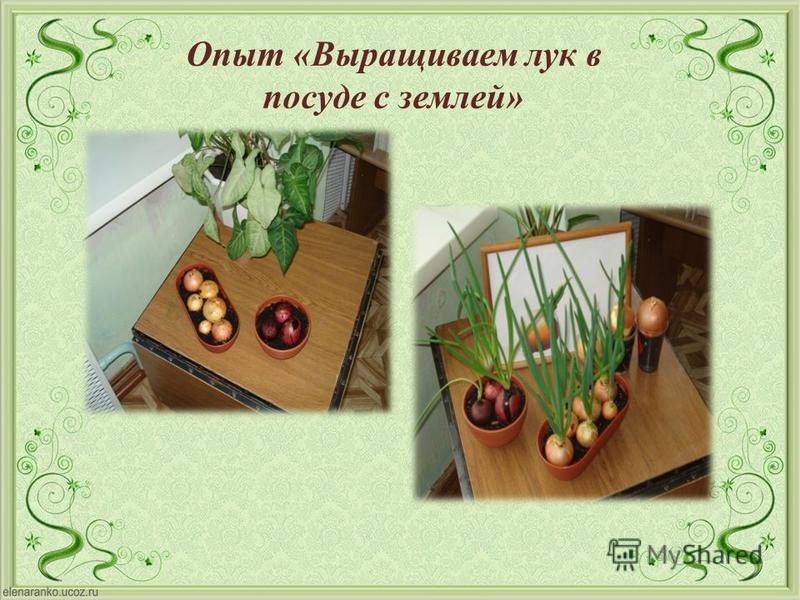 Опыт « Выращиваем лук в посуде с землей »