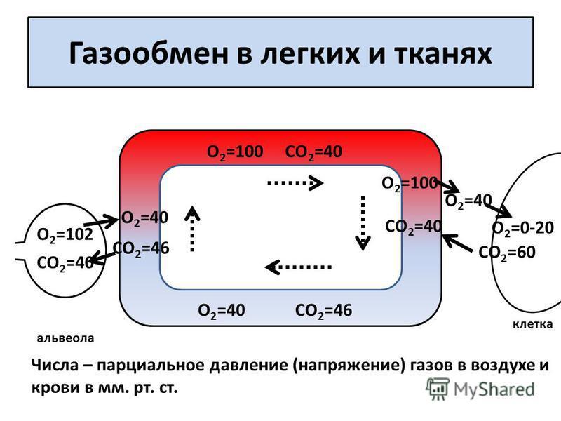 Газообмен в легких и тканях СО 2 =40 О 2 =102 О 2 =0-20 СО 2 =60 альвеола клетка СО 2 =46 СО 2 =40 СО 2 =46 О 2 =40 О 2 =100 СО 2 =40 О 2 =100 О 2 =40 Числа – парциальное давление (напряжение) газов в воздухе и крови в мм. рт. ст. О 2 =40