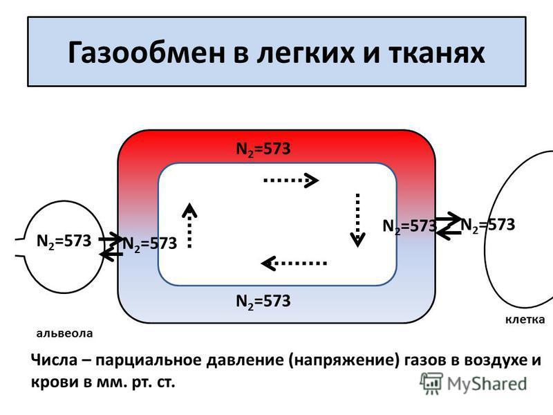 Газообмен в легких и тканях альвеола клетка Числа – парциальное давление (напряжение) газов в воздухе и крови в мм. рт. ст. N 2 =573