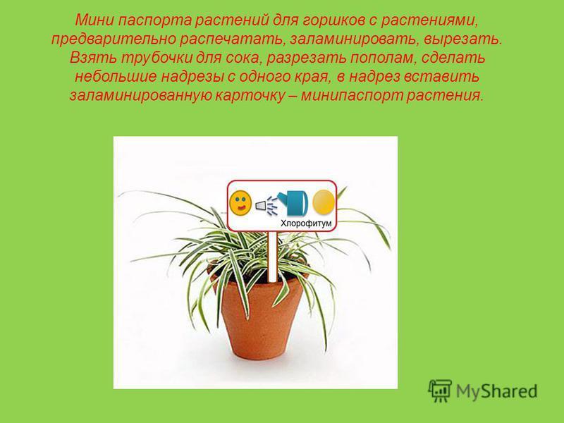 Мини паспорта растений для горшков с растениями, предварительно распечатать, заламинировать, вырезать. Взять трубочки для сока, разрезать пополам, сделать небольшие надрезы с одного края, в надрез вставить заламинированную карточку – мини паспорт рас