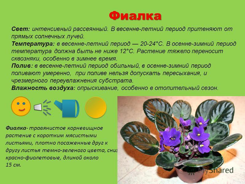 Картотека комнатных растений для детского сада