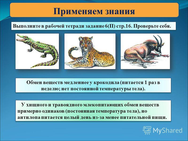 Применяем знания Выполните в рабочей тетради задание 6(П) стр.16. Проверьте себя. Обмен веществ медленнее у крокодила (питается 1 раз в неделю; нет постоянной температуры тела). У хищного и травоядного млекопитающих обмен веществ примерно одинаков (п