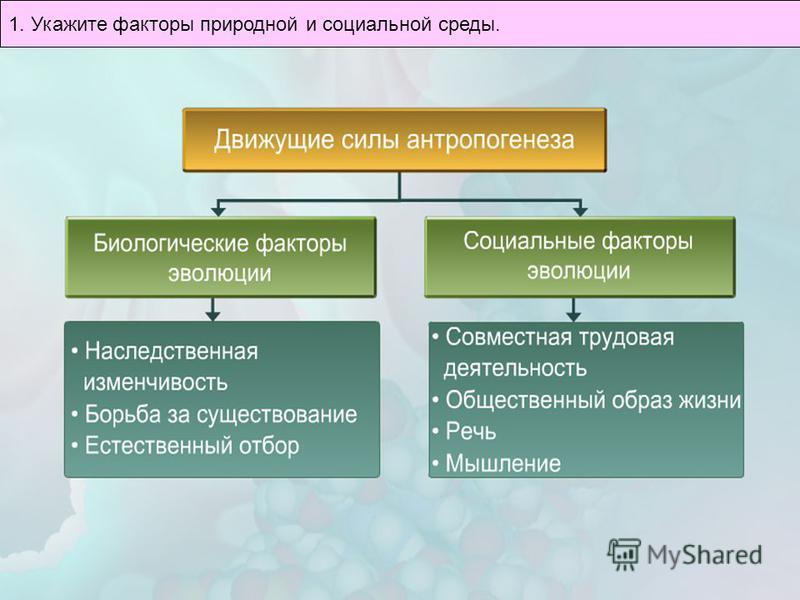1. Укажите факторы природной и социальной среды.