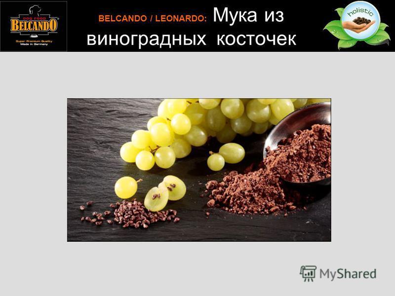 BELCANDO / LEONARDO: Мука из виноградных косточек