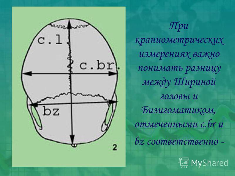 При краниометрических измерениях важно понимать разницу между Шириной головы и Бизигоматиком, отмеченными c.br и bz соответственно -