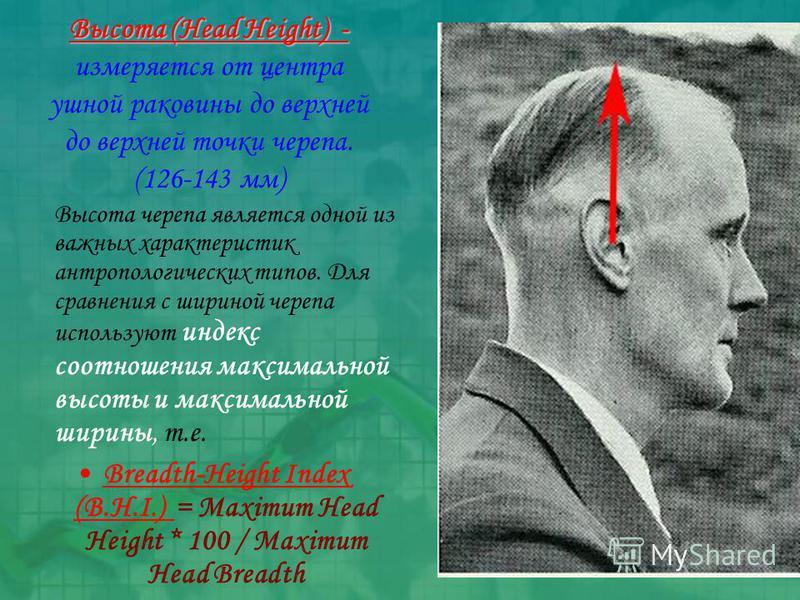 Высота (Head Height) - Высота (Head Height) - измеряется от центра ушной раковины до верхней до верхней точки черепа. (126-143 мм) Высота черепа является одной из важных характеристик антропологических типов. Для сравнения с шириной черепа используют