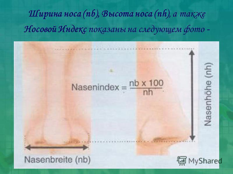 Ширина носа (nb), Высота носа (nh), а также Носовой Индекс показаны на следующем фото -