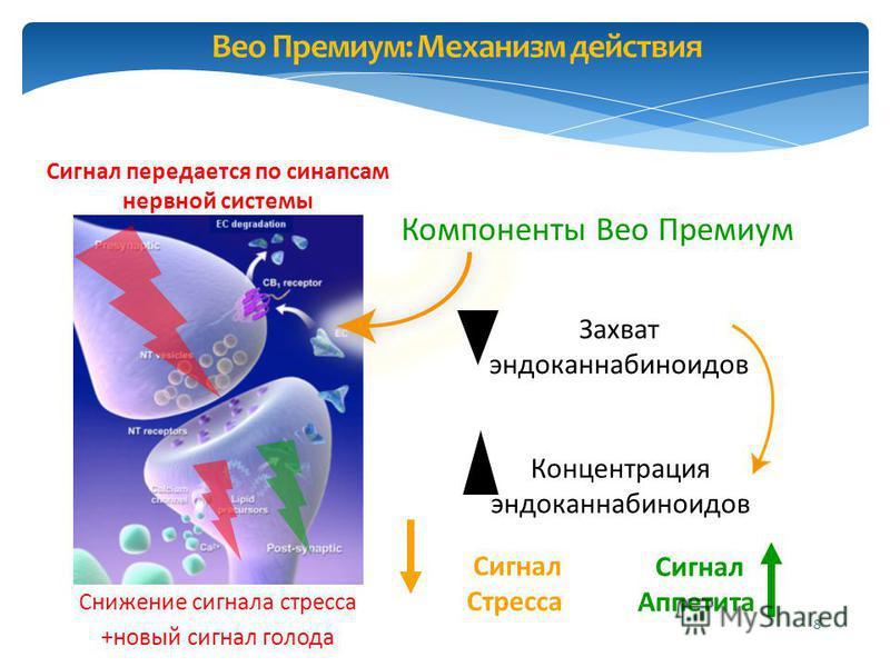 8 Концентрация эндоканнабиноидов Захват эндоканнабиноидов Компоненты Вео Премиум Вео Премиум: Механизм действия Сигнал передается по синапсам нервной системы Сигнал Стресса Сигнал Аппетита Снижение сигнала стресса +новый сигнал голода