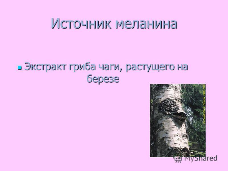 Источник меланина Экстракт гриба чаги, растущего на березе Экстракт гриба чаги, растущего на березе
