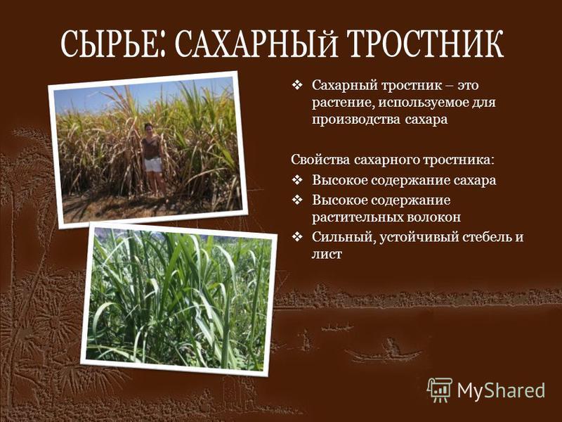 СЫРЬЕ: САХАРНЫЙ ТРОСТНИК Сахарный тростник – это растение, используемое для производства сахара Свойства сахарного тростника: Высокое содержание сахара Высокое содержание растительных волокон Сильный, устойчивый стебель и лист