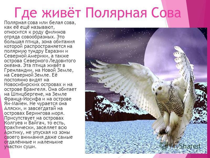 Где живёт Полярная Сова Полярная сова или белая сова, как её ещё называют, относится к роду филинов отряда совообразных. Это большая птица, зона обитания которой распространяется на полярную тундру Евразии и Северной Америки, а также острова Северног