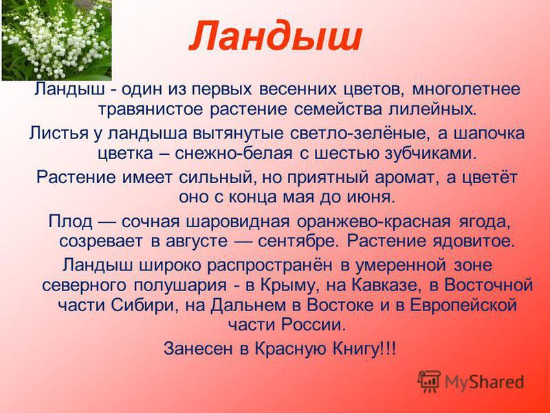 Ландыш Ландыш - один из первых весенних цветов, многолетнее травянистое растение семейства лилейных. Листья у ландыша вытянутые светло-зелёные, а шапочка цветка – снежно-белая с шестью зубчиками. Растение имеет сильный, но приятный аромат, а цветёт о