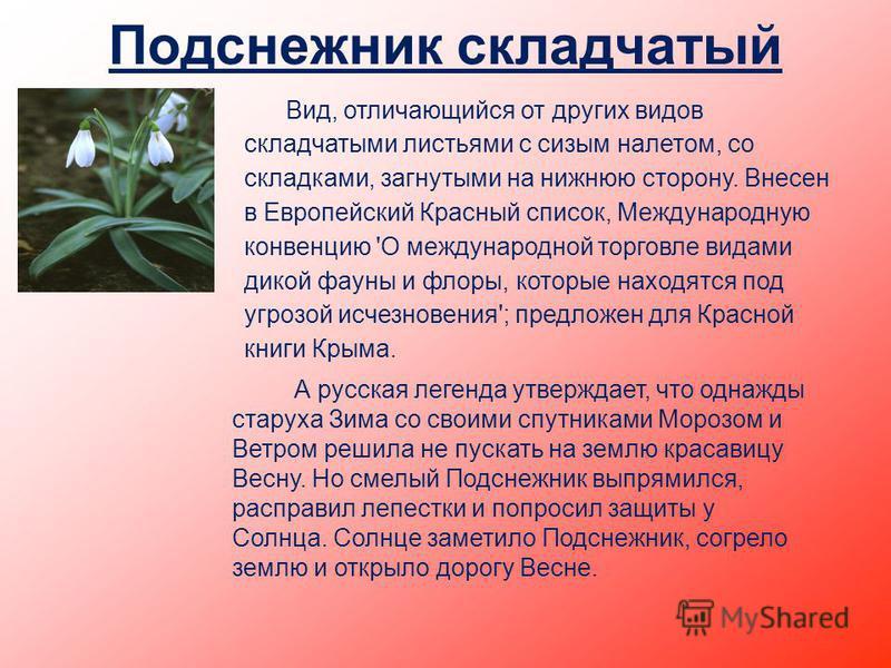 Подснежник складчатый Вид, отличающийся от других видов складчатыми листьями с сизым налетом, со складками, загнутыми на нижнюю сторону. Внесен в Европейский Красный список, Международную конвенцию 'О международной торговле видами дикой фауны и флоры