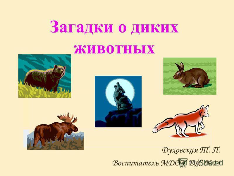 Загадки о диких животных Духовская Т. П. Воспитатель МДОУ Д/С 14