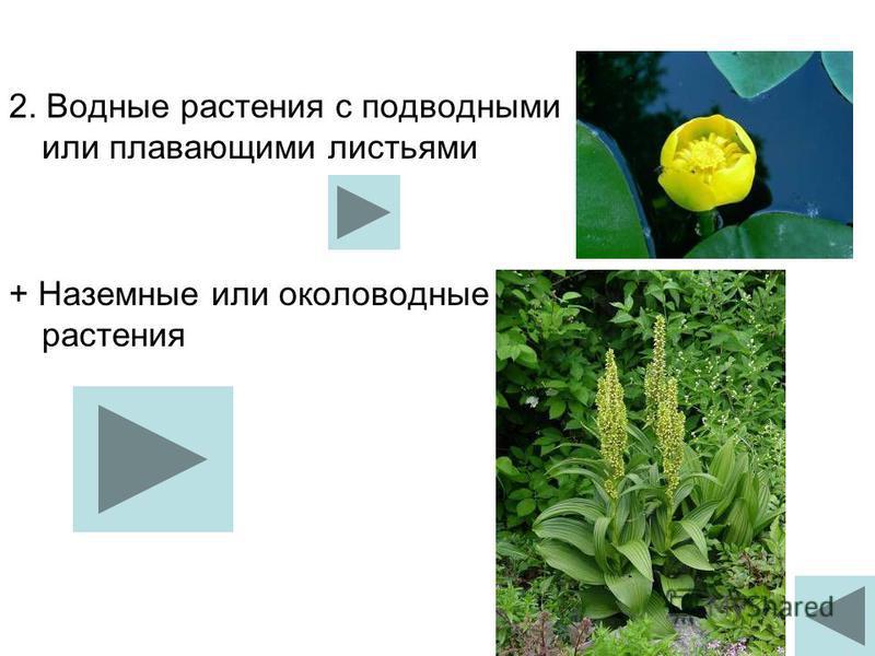 2. Водные растения с подводными или плавающими листьями + Наземные или околоводные растения