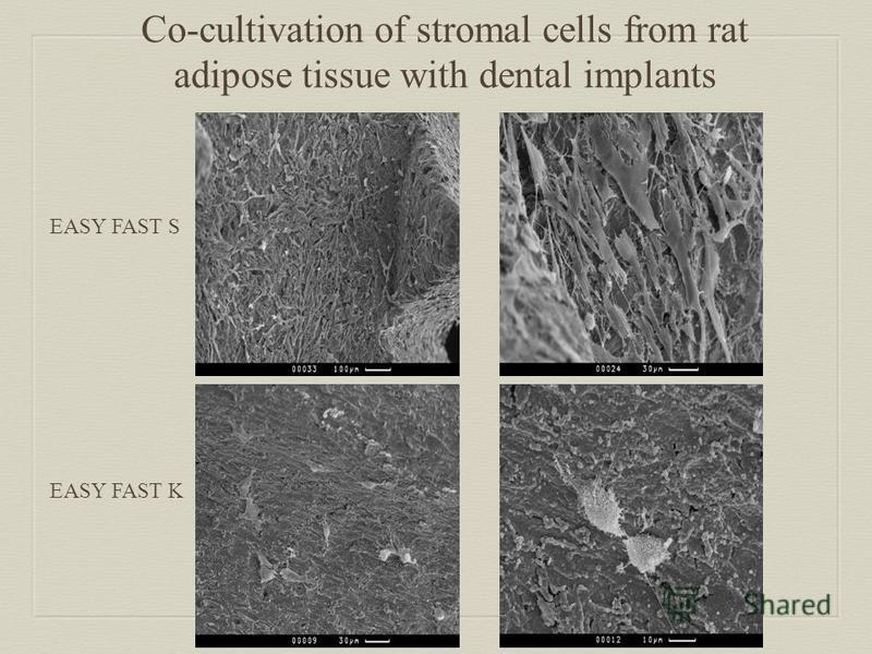 EASY FAST S EASY FAST K Co-cultivation of stromal cells from rat adipose tissue with dental implants