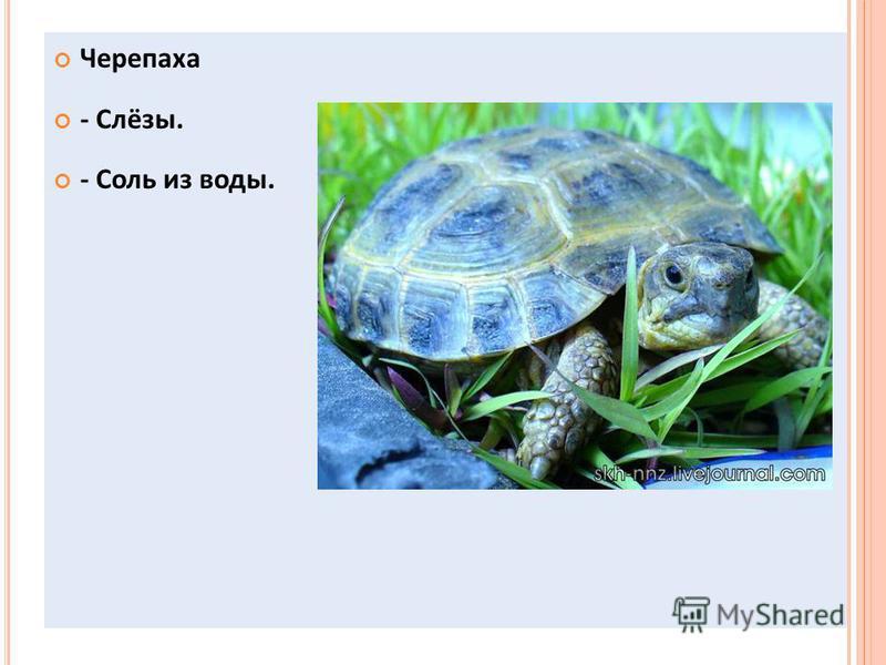 Черепаха - Слёзы. - Соль из воды.