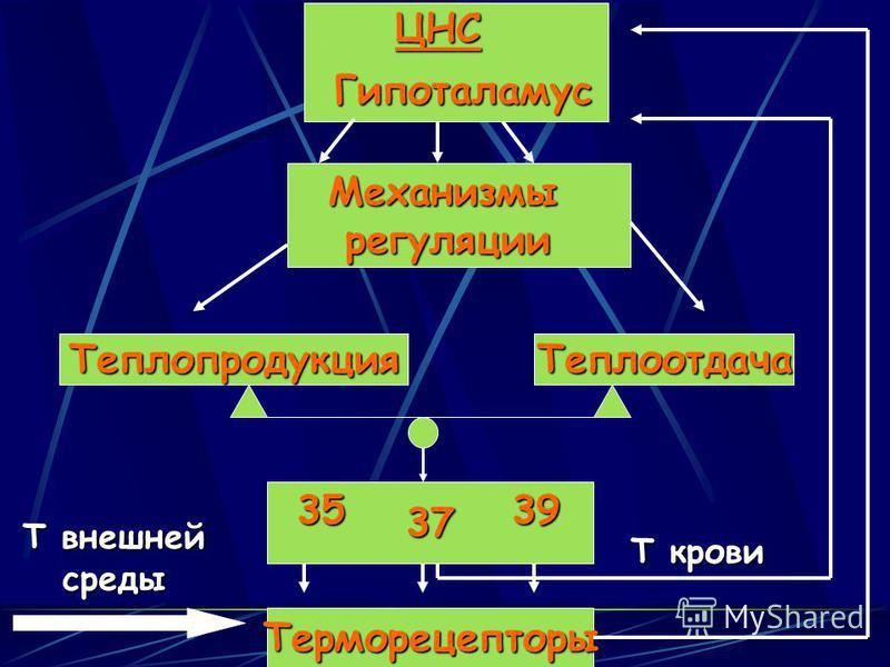Теплопродукция Теплоотдача 373539Терморецепторы Т внешней среды ЦНСГипоталамус Механизмы регуляции регуляции Т крови