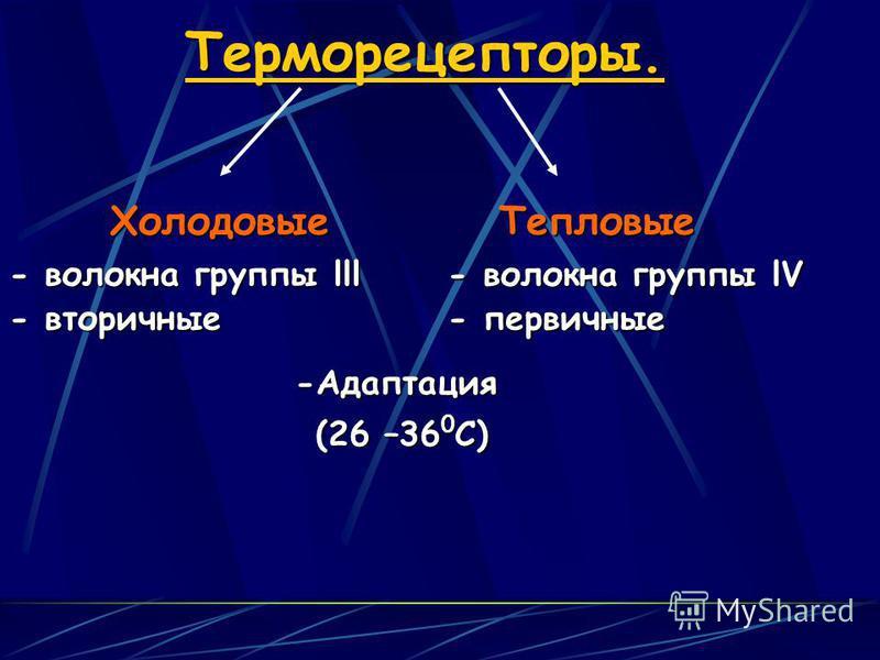 Терморецепторы. Холодовые Тепловые - волокна группы lll - волокна группы lV - вторичные - первичные -Адаптация (26 –36 0 С)