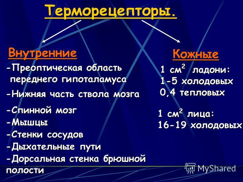 Терморецепторы.Внутренние Кожные -Преоптичешская область переднего гипоталамуса переднего гипоталамуса -Нижняя часть ствола мозга -Спинной мозг -Мышцы -Стенки сосудов -Дыхательные пути -Дорсальная стенка брюшной полости 1 см 2 ладони: 1-5 холодовых 0